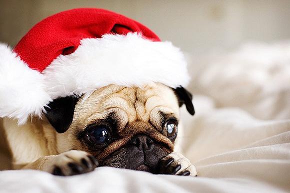 cute-christmas-animals-41-y3lca96pjl5vfvu0a8owuw