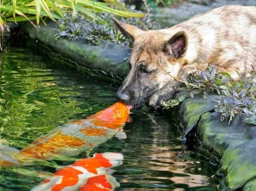 cute_kisses_for_animals