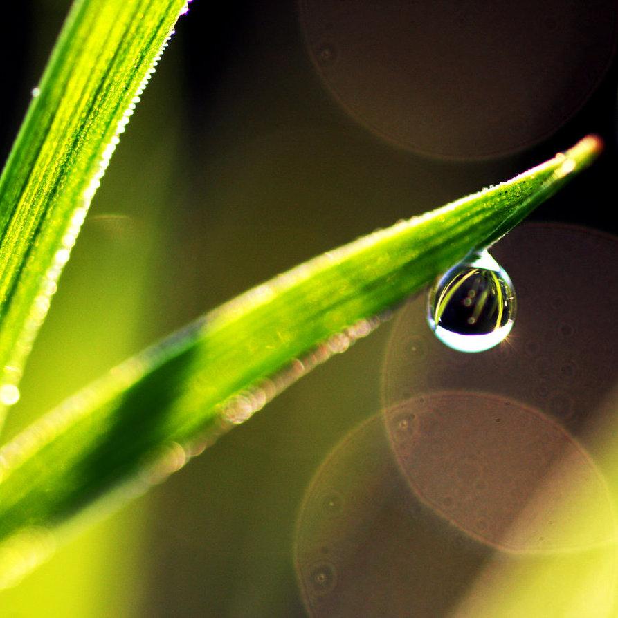 dew-drop4