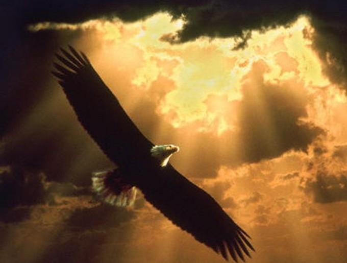 eagle4-suns