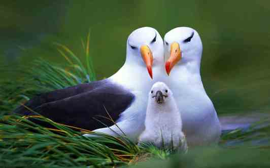 family-of-beautiful-bird