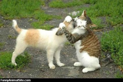 funny-animals-kissing-02