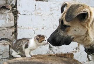 funny-animals-kissing-2