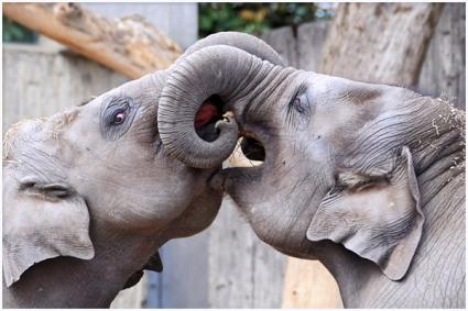 funny-baby-elephants_7