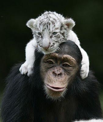 funny-tiger-cub-2