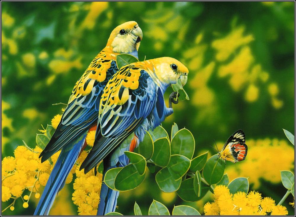 hd-birds-wallpapers