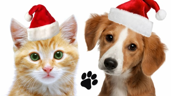 hd-family-christmas-pics-with-dogs
