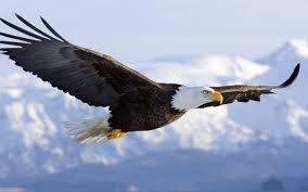 images-eagles