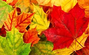 images-fall-leaves