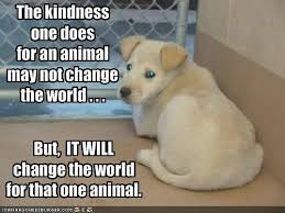 imageskindenes-for-animals