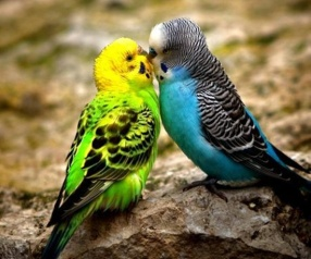 kissing-animals-26