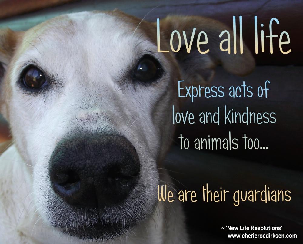 love-animals-wallpaper
