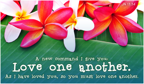 love-one-another-plumeria-550x320