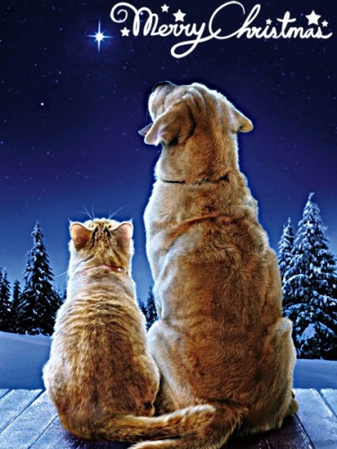 merrychristmas-cat-dog-rescue-diary