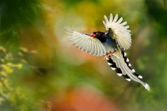 most-beautiful-flying-birds-hd-1-1