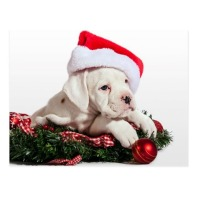 small_boxer_puppy_little_boxers_puppy_christmas_postcard-r8b686f16ab494fee89d5f8bda4318215_vgbaq_8byvr_512