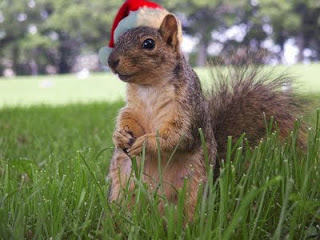squirrel-christmas