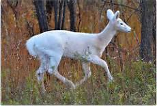 th-jpg-deer