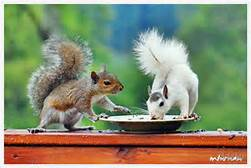 th-jpg-squirrel