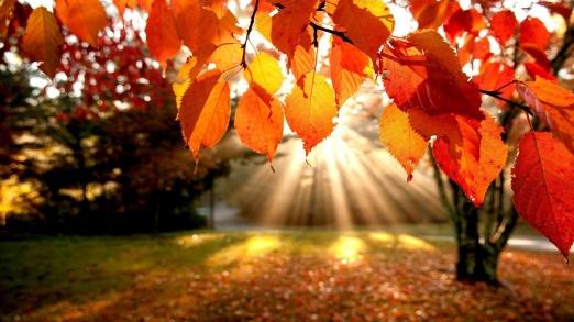 wallpaper-autumn-16