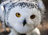 zb5-owl