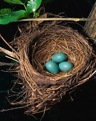 201101-eggs