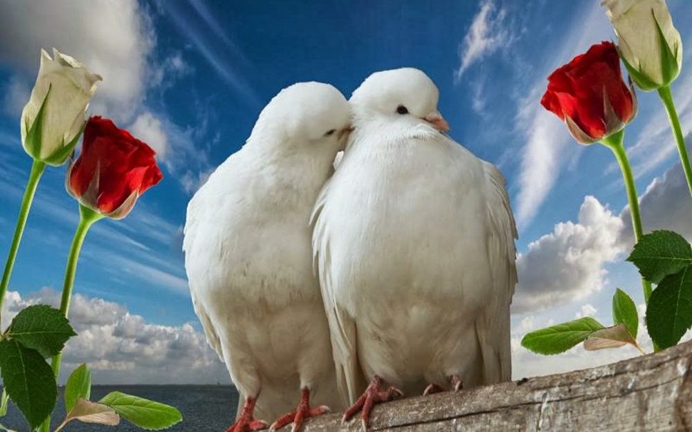 love-birds-wallpaper-41