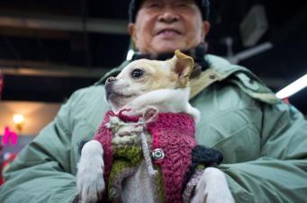 market-dog