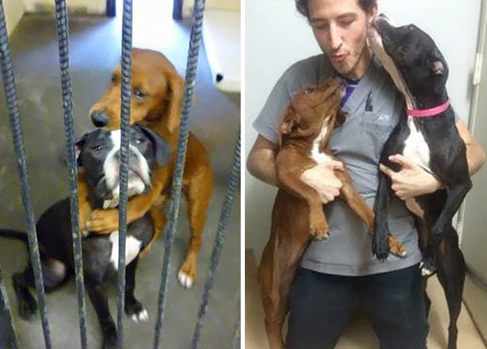 abrazo-perros-refugio-salvar-vida-kala-keira-angels-among-us-2