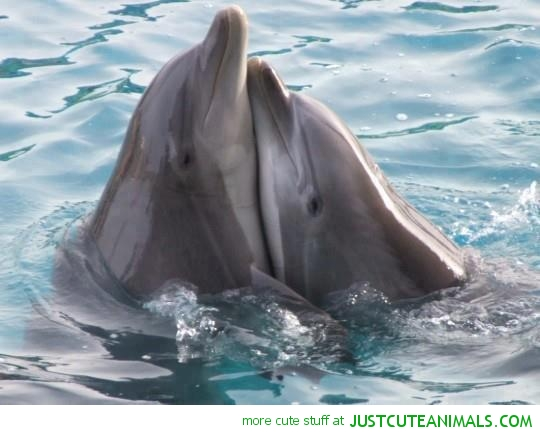 beautiful-dolphins-cute-animal-pics-pictures-images