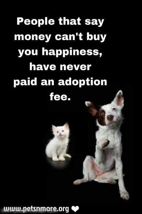 Save Me Dog Rescue Facebook