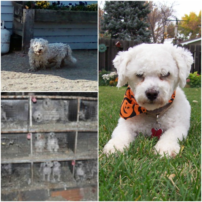 howie-rescued-collage