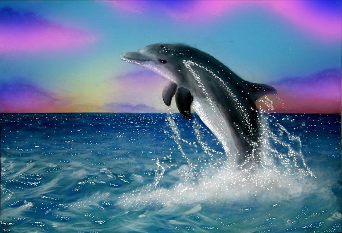 jumping-dolphin