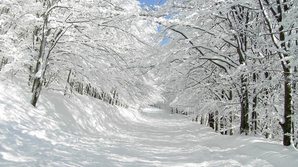 path-trail-trees-snow-winter-wallpaper-1