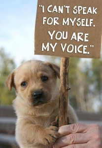 quotes-about-animal-abuse-and-animal-rights-207x300