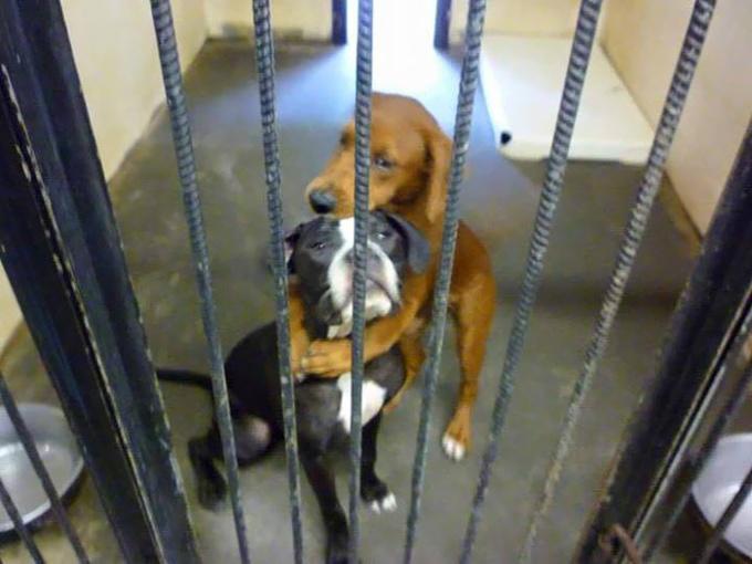shelter-dogs-hug-photo-viral-save-life-euthanasia-kala-keira-angels-among-us-4