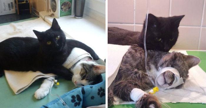 veterinary-nurse-cat-hugs-shelter-animals-radamenes-bydgoszcz-poland-fb__700