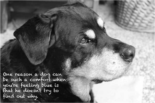nice-dog-quotes-pictures-for-facebook-7-16ab3bd7