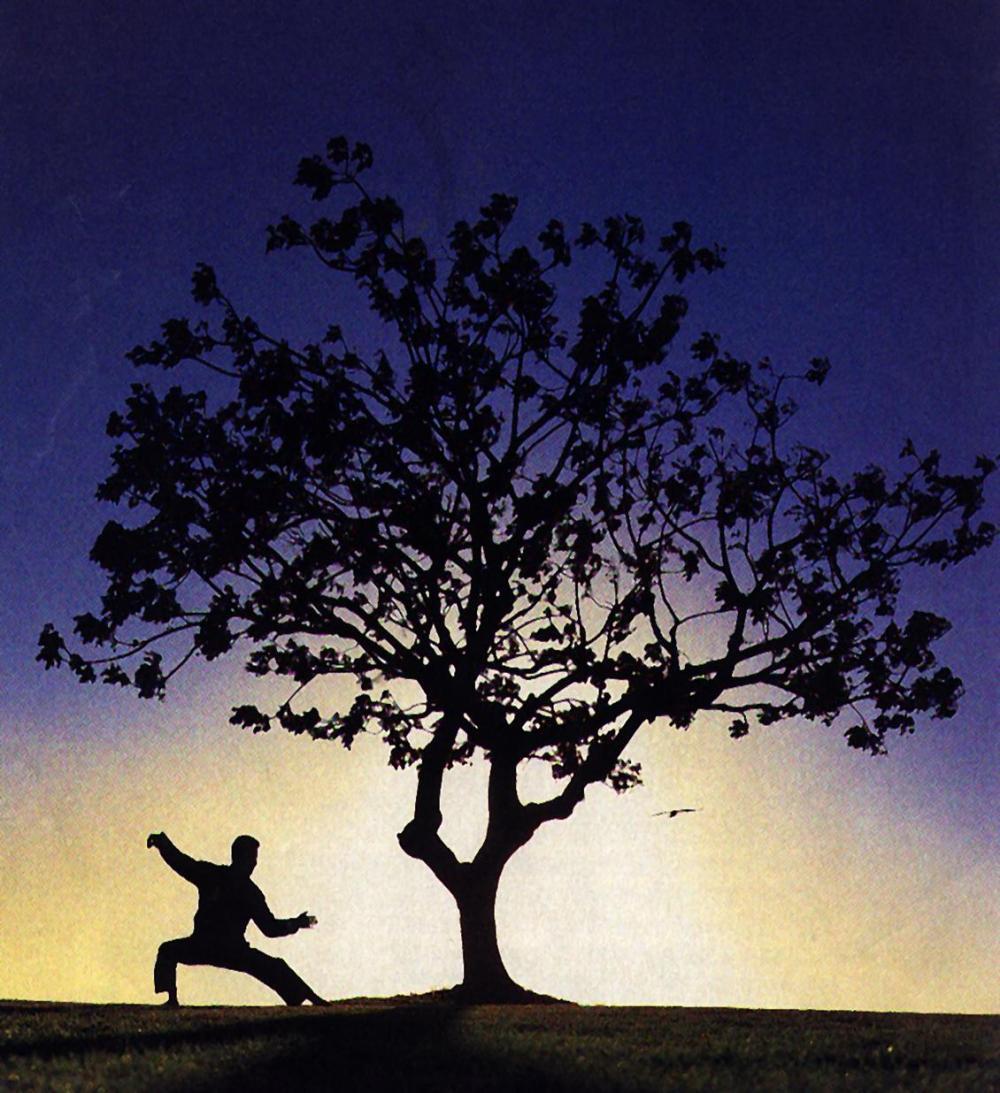 tai-chi-tree