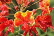 flowers panama