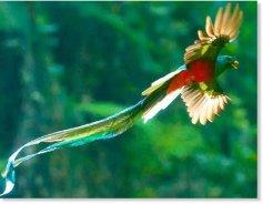 quetzal_20flying_20mejor