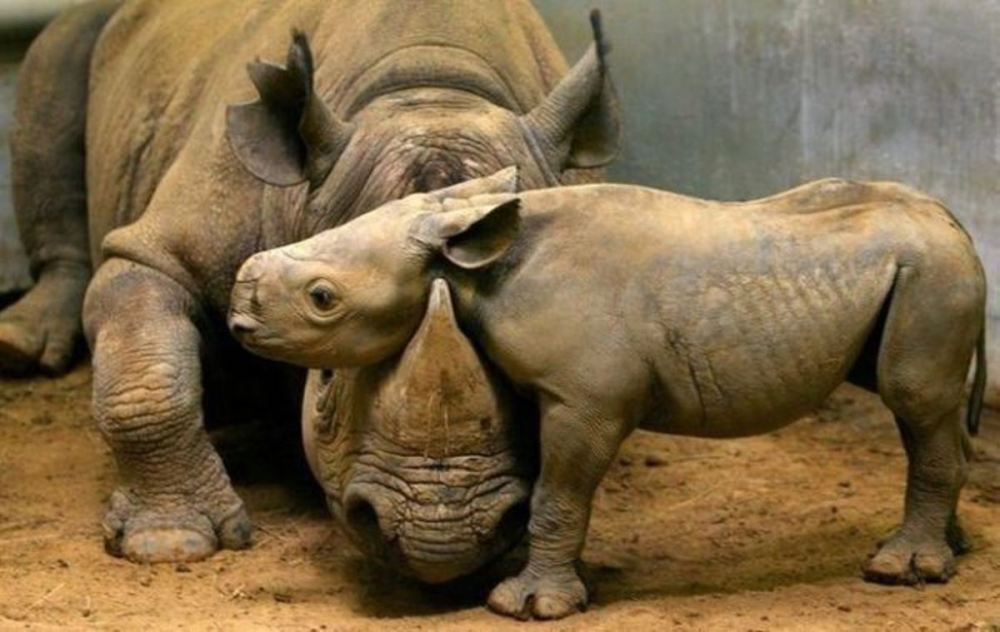 adorable-animals-giving-hugs-rhino