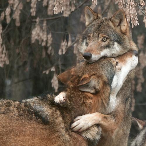 animal-brown-eyes-hug-love-photography-Favim.com-41237