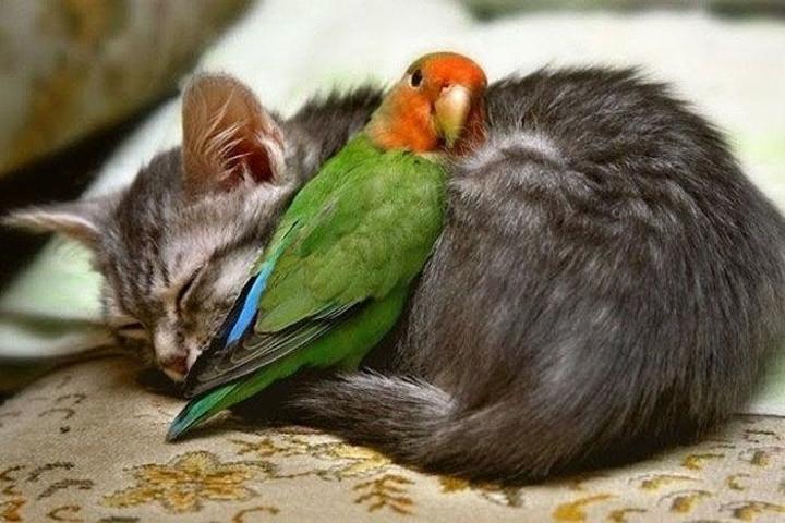 animal-hugs-4