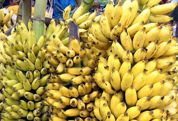 Banana-Desease