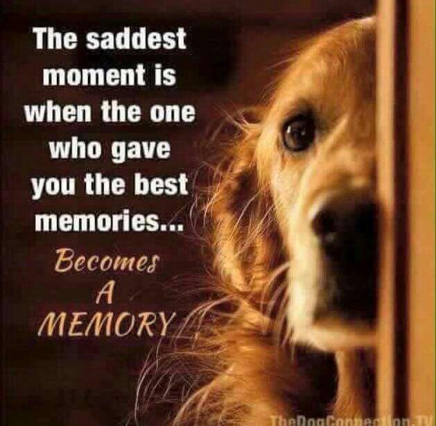Losing A Pet Sympathy