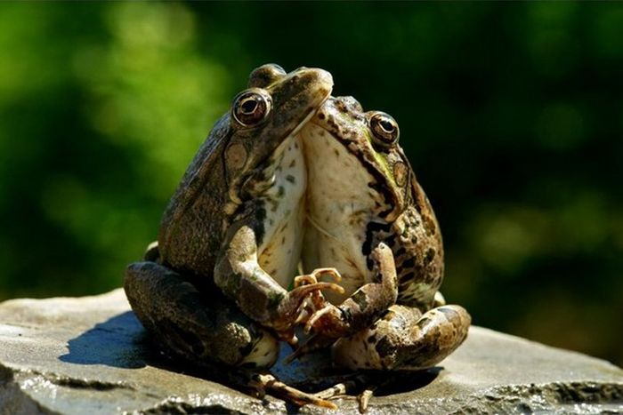 Funny-Animal-Frog