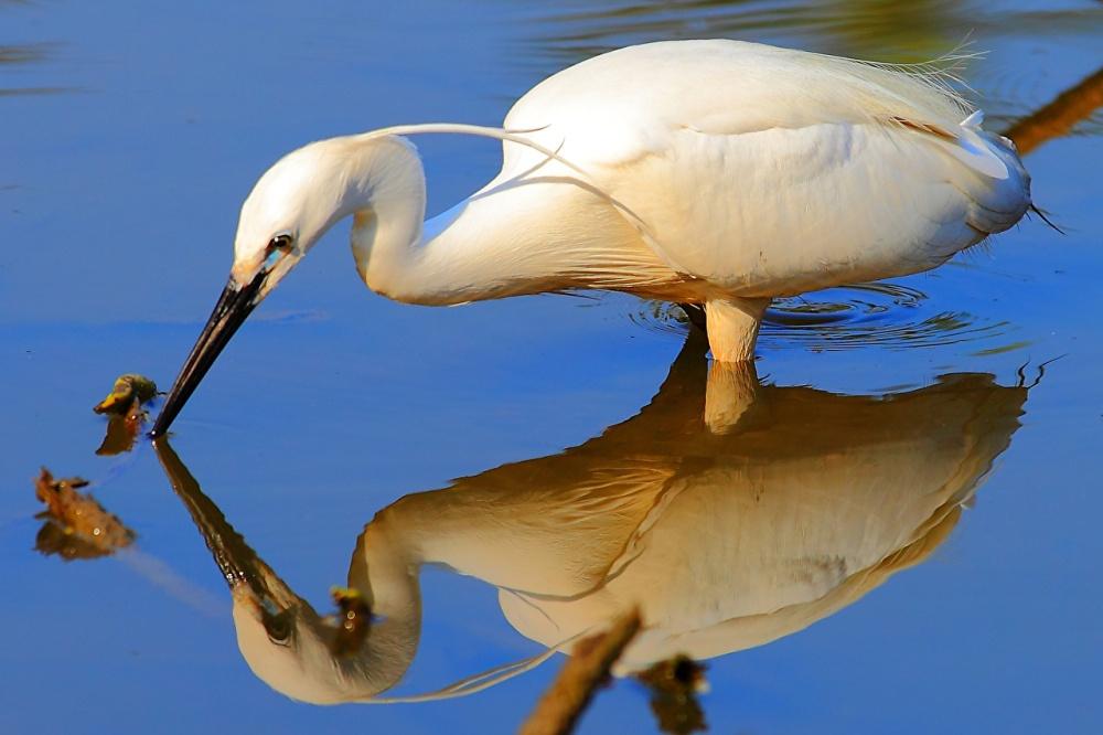 Heron_Birds_Water_436911