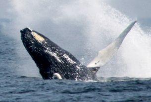 1010605-whale