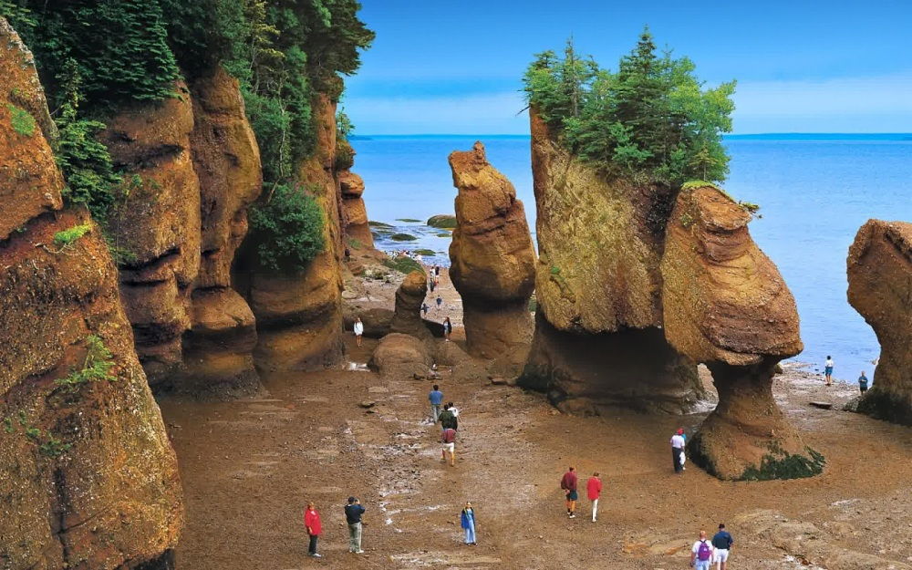 56a93-bay_of_fundy_tide_out_trees_beach_canada_hd-wallpaper-1576435